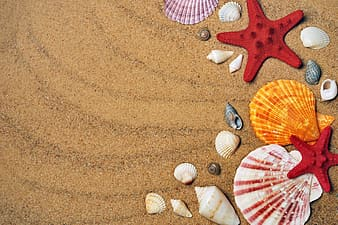 Red, white, and yellow seashells on brown sand