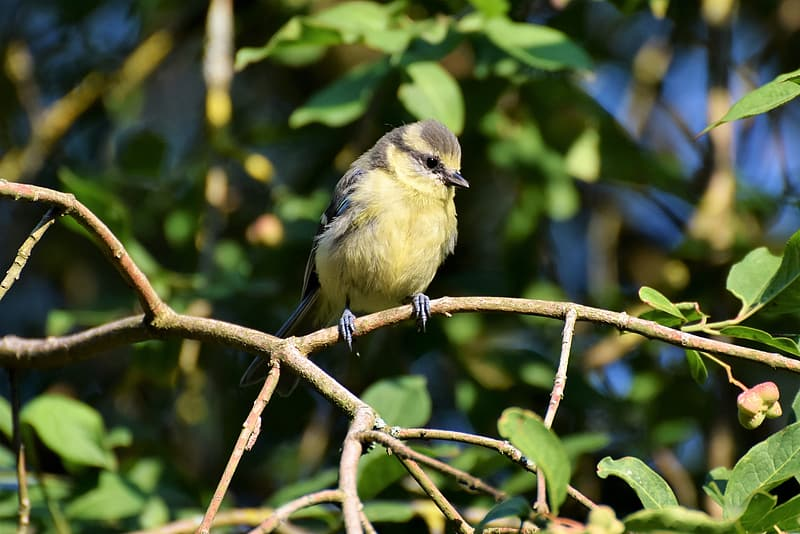 Selective focus photography of green bird perching on branch