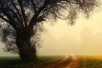 Road and tree covered with fog