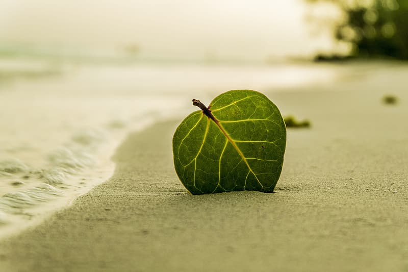 Shallow focus photography of green leaf on white sand
