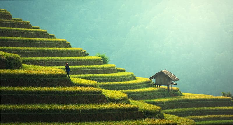 Landscape photography of rice terraces during daytime