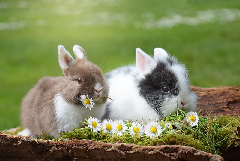 Selective focus photography of two brown and white rabbits eating flowers