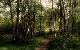 Pathway surrounded with trees