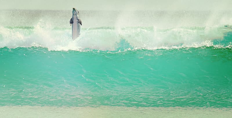 Dolphin in sea waves