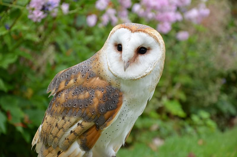 Brown and white owl at daytime