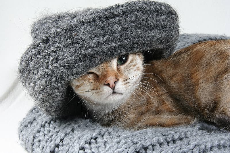 Brown cat on grey knitted textile
