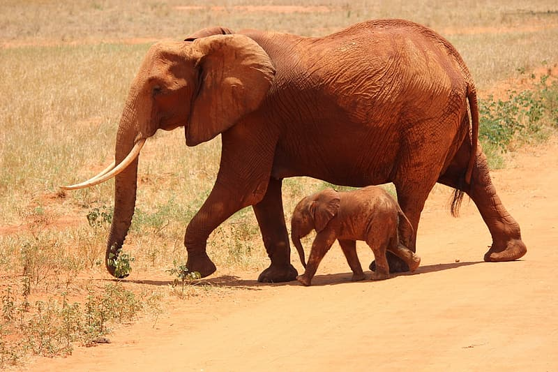 Brown elephant and baby elephant on ground
