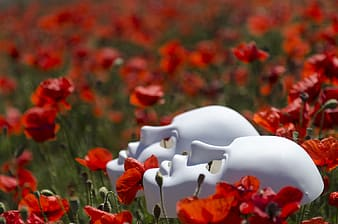 Two white porcelain masks on red poppy flower field