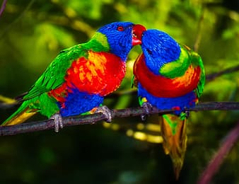 Closeup photo of two multicolored birds