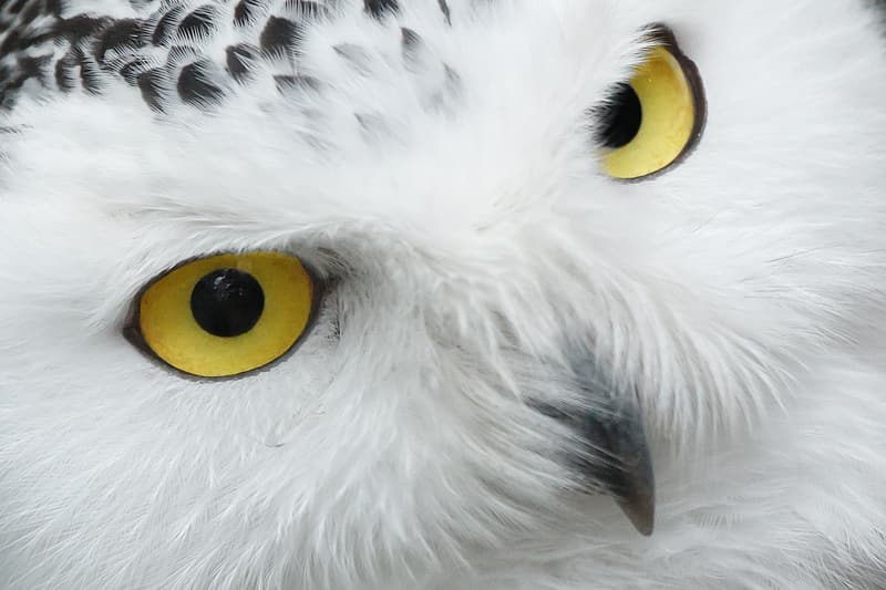 Close up photo of white and black owl
