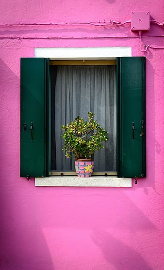 Green potted plant with pink and brown plant pot on white and green window