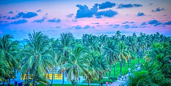 Palm trees under cloudy sky