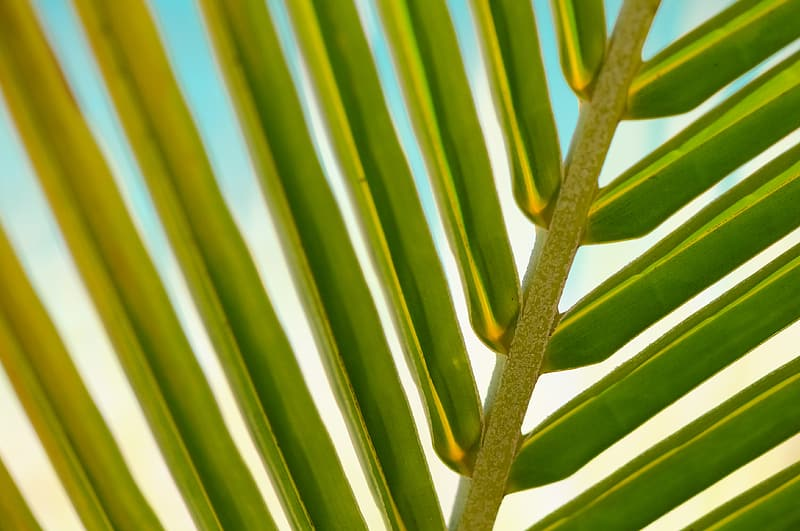 Green palm tree leaf in close-up photography