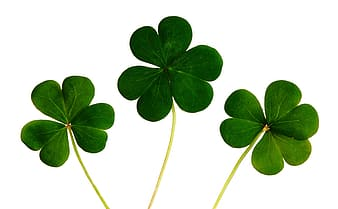 Photo of green clovers