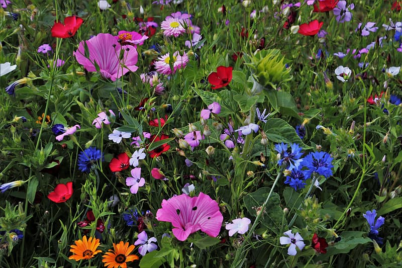 Bed of blue, pink, and white petaled flowers