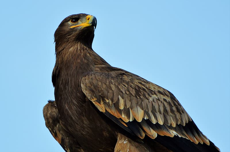 Worm's eye view of brown eagle