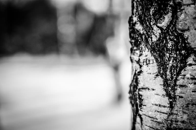 Grayscale photo of tree trunk selective focus photography