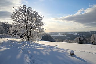 Bare tree on snow covered ground during daytime