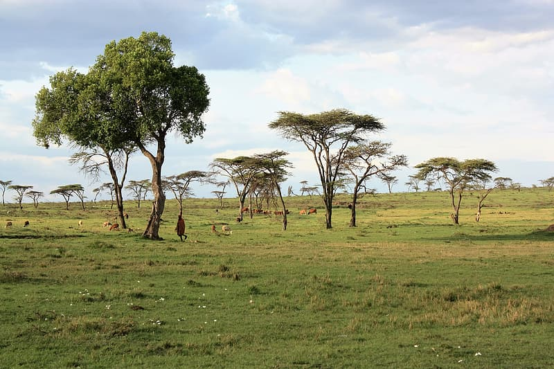 Brown bare trees on green grass field during daytime