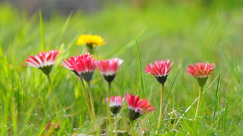 Pink and white flowers on green grass field