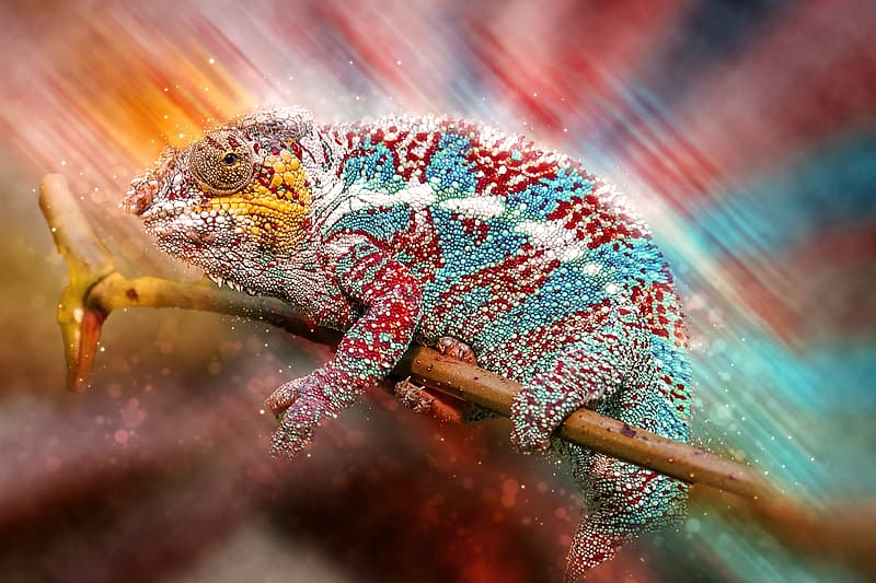 Red and teal chameleon