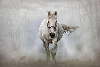 White horse running with fog at daytime