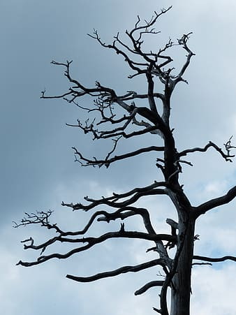 Gray withered tree