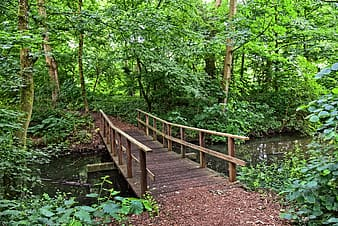 Brown wooden bridge surrounded by green leafed trees