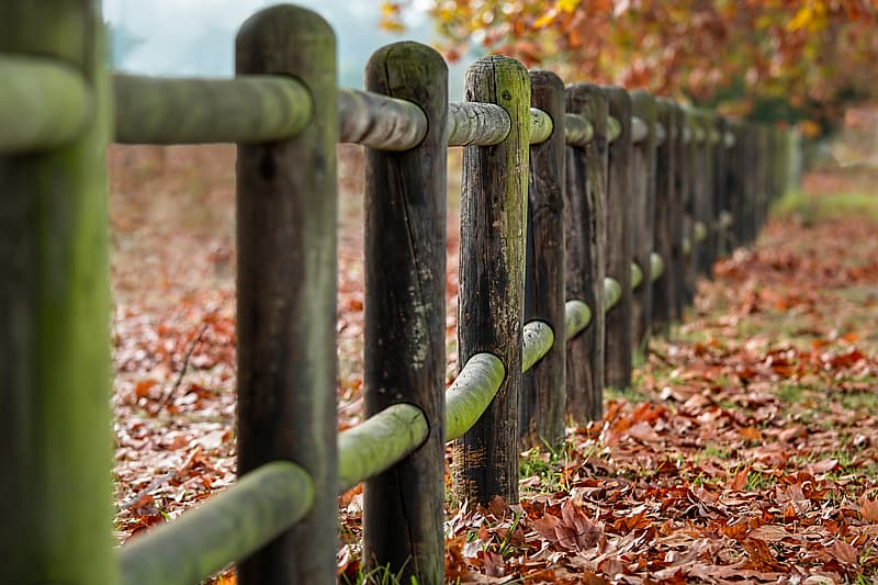 Focus photography of wooden fence