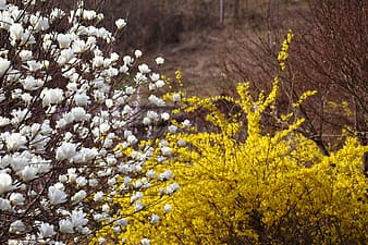 White and yellow flowers on brown field during daytime