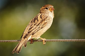 Brown and white bird on brown wooden stick