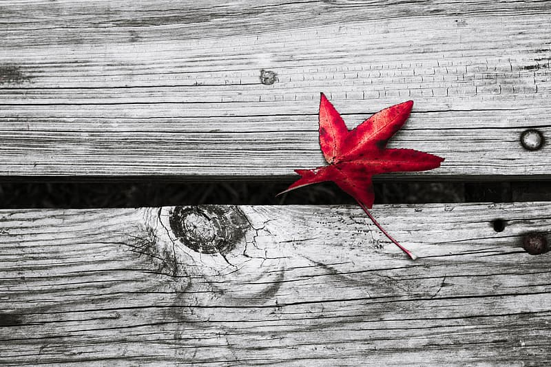 Red maple leaf on gray wooden plank