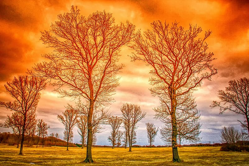 Leafless trees on green grass field under orange and gray cloudy sky