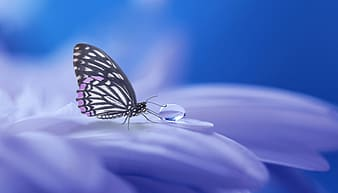 Paperkite butterfly perched on petaled flower
