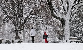 Person in red jacket walking on snow covered ground near brown trees during daytime