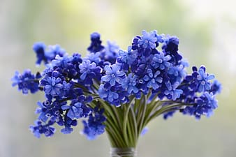 Blue flowers plant blooming during daytime