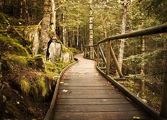 Brown wooden bridge near forest