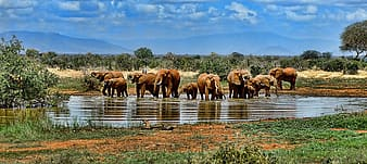Group of elephants on body of water at daytime