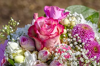 Pink and purple petaled flowers