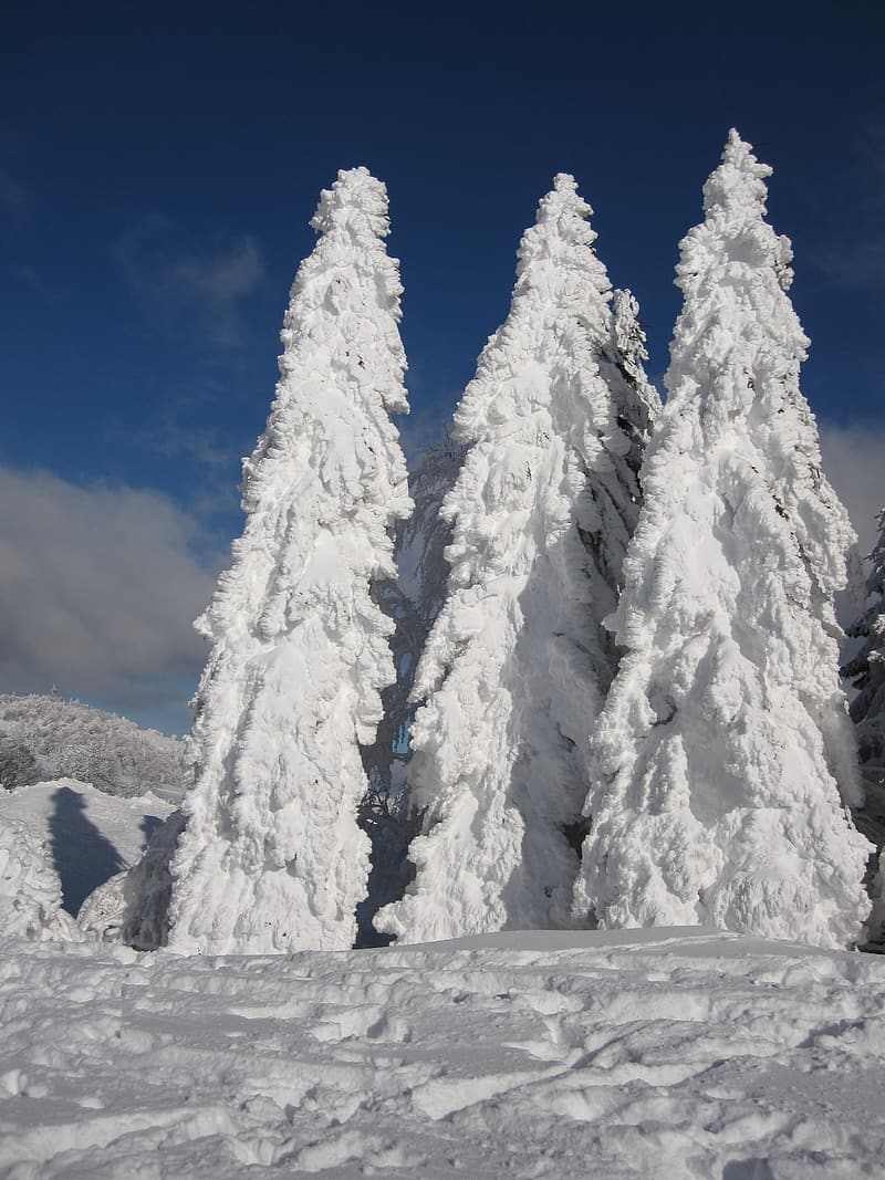 Green leaf trees covered by snow under blue sky at daytime