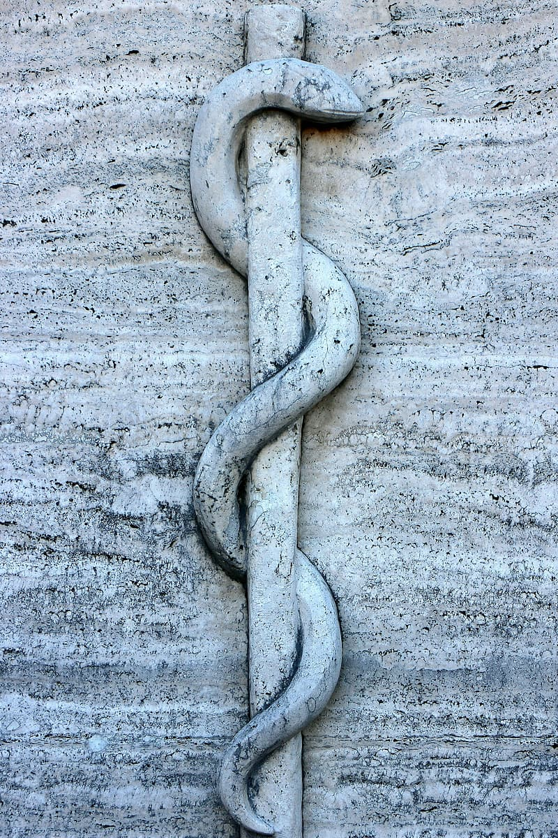 Snake carved wall art