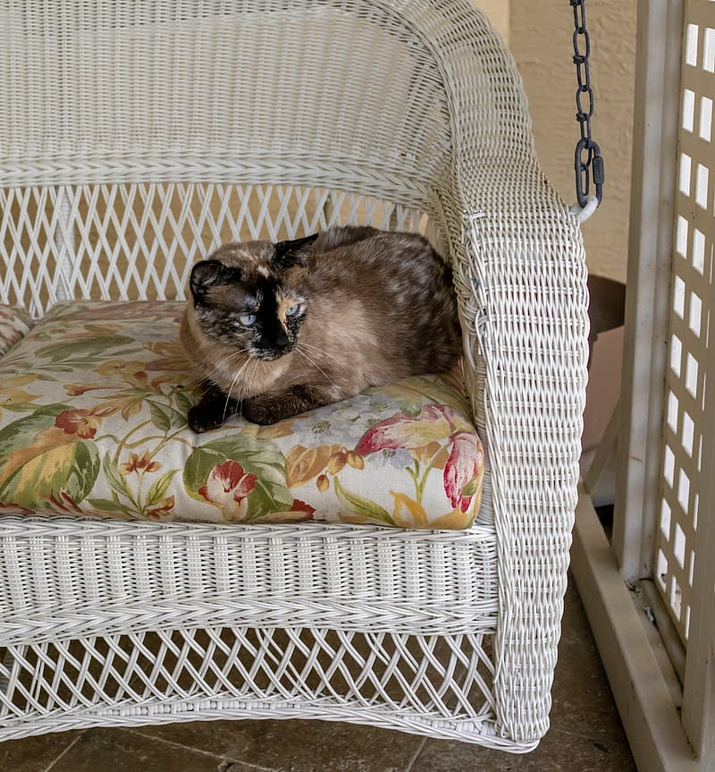 Brown and black cat on white and green floral armchair