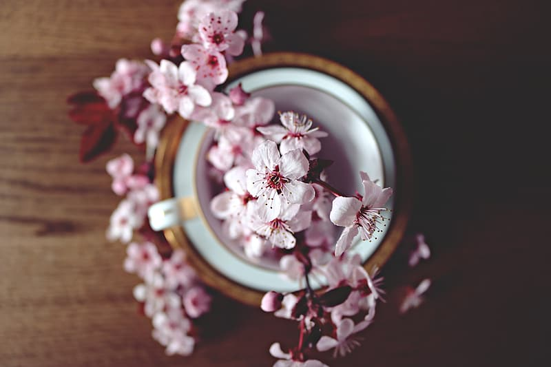 Pink petaled flowers on table