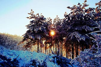 Photo of trees during winter during dawn