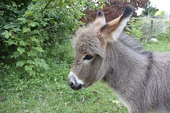 Gray donkey on green grass during daytime