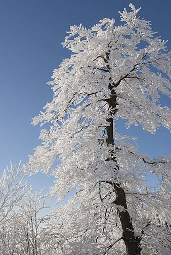 Long angle view of tree with coated snow