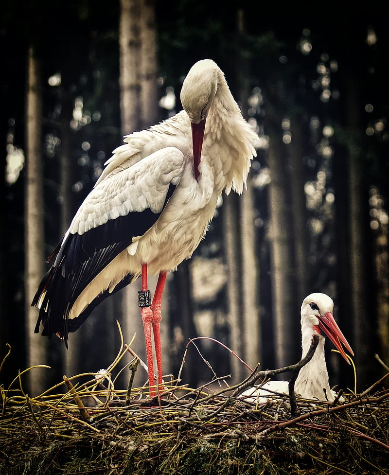 White stork perched on brown tree branch during daytime