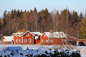 Red houses surrounded with trees
