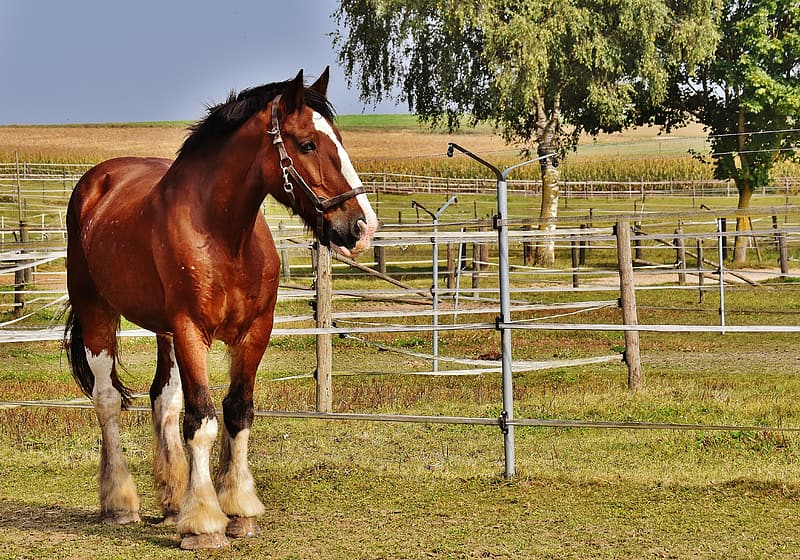 Brown and white horse standing on green grass field at daytime