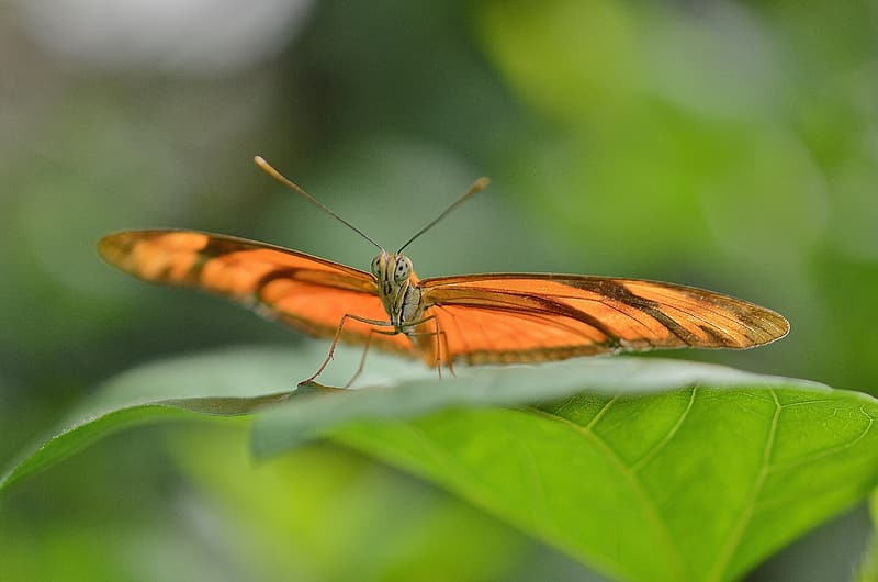 Selective focus photography of orange butterfly on green leaf during daytime